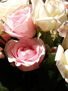 Wine & Roses at The Bridgeton House