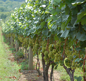 New Hope Wineries