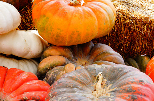 pumpkin-picking-bucks-county