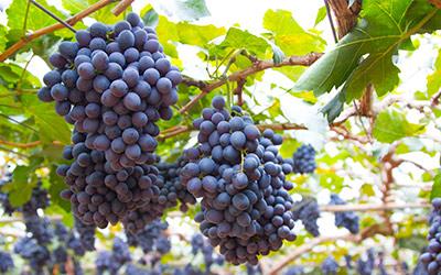 New Hope PA Winery