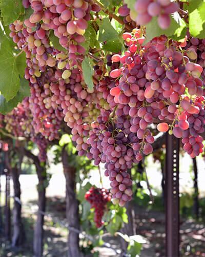 New Hope Winery