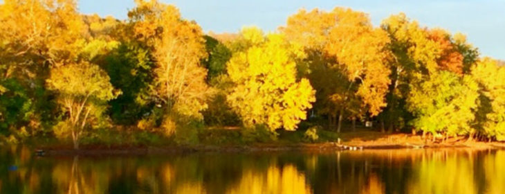 Bright yellow trees reflecting in the Delaware River at Bridgeton House on the Delaware